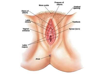 wanita sehat cantik organ kewanitaan